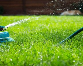 Tips for Your Lawn in Summer Time
